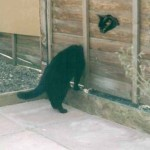 Strange Cat Photo