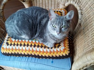 Mini Samuel - a  3 year old female silver tabby cat, sitting on a crocheted cushion